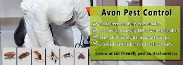 Best Pest Control in Vancouver Area | Bed Bugs, Wasps, Ants, Rodents