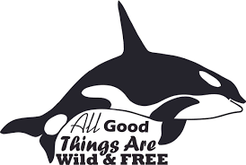 Killer Whale Wild And Free Orca Customized Wall Decal Custom Vinyl Wall Art Personalized Name Baby Girls Boys Kids Bedroom Wall Decal Room Decor Wall Stickers Decoration Size 20x40
