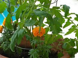 south florida vegetable garden