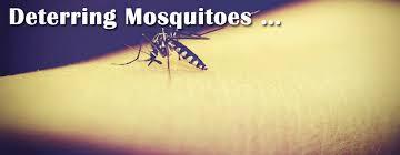 Mosquitoes Stutzmans Greenhouse Garden Centers