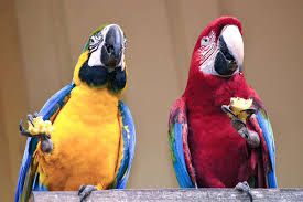 parrots make wise investment decisions