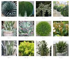 best plants for sydney balcony gardens