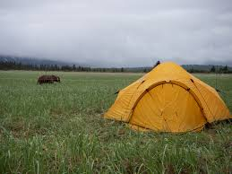 Camping With An Electric Bear Fence Field Stream