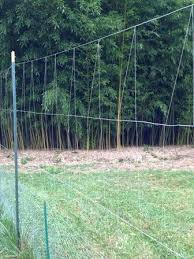 Grow It Eat It Fishing Line Deer Fence Update Deer Fence Deer Resistant Garden Deer Proof