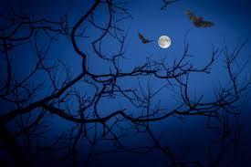Full moon, night, bats, darkness, halloween - free image from needpix.com