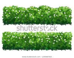 Green Flowering Fence Boxwood Shrubs Set Stock Vector Royalty Free 1305687025