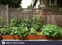 Backyard Organic Vegetable Garden Planter With A Wooden Fence In Background Vancouver Bc Canada Stock Photo Alamy