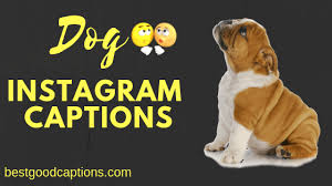 weird but effective dog captions for instagram dog lovers
