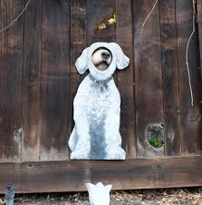 8 Lucky Dogs With Their Own Special Windows Have Their Eye On You The Dog People By Rover Com