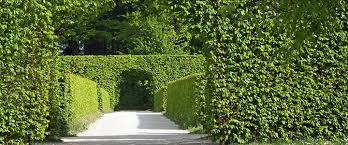 What Are Living Fences And How Do You Grow Them Green Journal