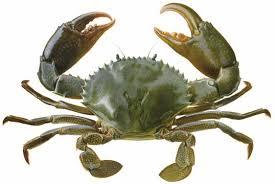 Fisheries fact sheet - Mud crab