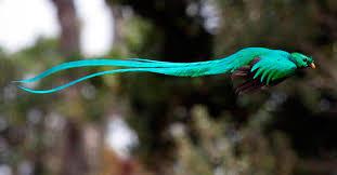 El Quetzal, de dios maya a mascota - Desinformémonos