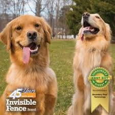 40 Pet Solutions Ideas Invisible Fence Pets Solutions