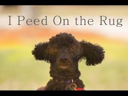 cleaning jute rug from urine you