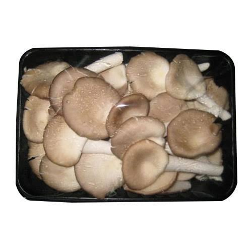 Image result for oyster mushroom pack