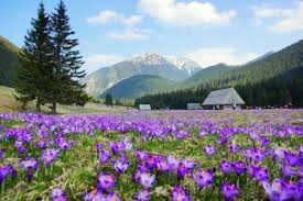 Image result for mountains in spring photos