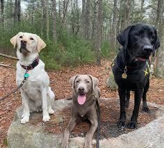 North Hill Marsh Dam - Duxbury, Massachusetts - Hiking Trail ...