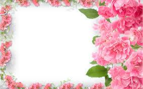 تحميل خلفيات الزهور الوردية الإطار 4k الأزهار المفاهيم إطارات