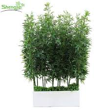 decorative natural plants outdoor