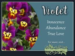 violet meaning symbolism flower