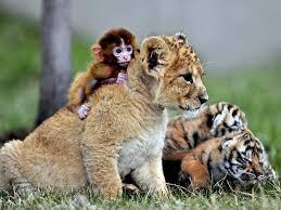 صور حيوانات مضحكة