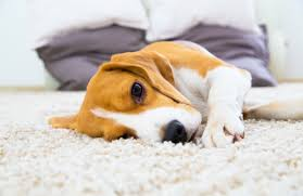 the best rugs for pets tips for