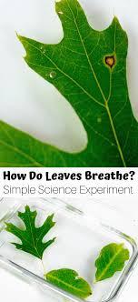 how do plants breathe activity for kids