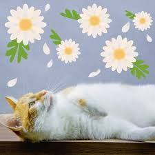 Floating Daisy Wall Decals Daisies Wall Stickers Wallums