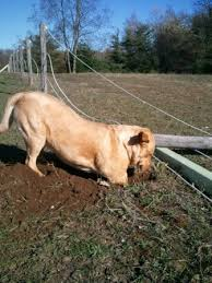 How To Stop Your Dog From Digging Under The Garden Fence