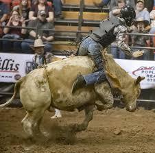 bull rider bull riding rodeo cowboy