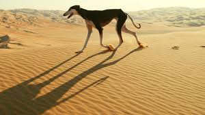 Dog is Fast Enough to Catch a Gazelle ...