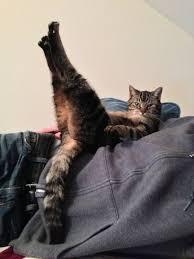 صور قطط مضحكة جدا اجمل الحيوانات الاليفه على الفيس بوك حنين