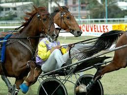 Courses à Vincennes en Réunion 1 - Les Fanas des Courses Hippiques