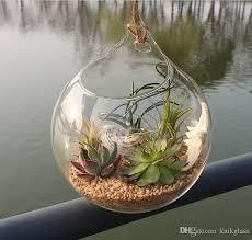 plants indoor wall glass vase