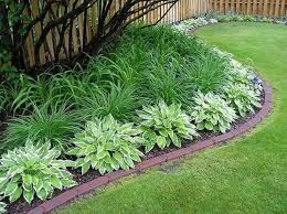 some good front yard plants with