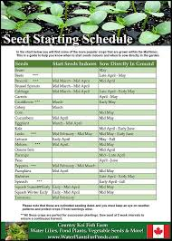 growing vegetables from seed planting