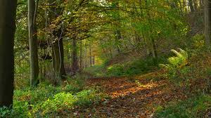 Autumn in Hilda Wood | Taken last weekend on a walk in the H… | Flickr