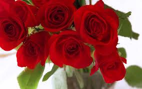 أجمل خلفيات الورد والزهور Roses Hd Wallpapers اكوام