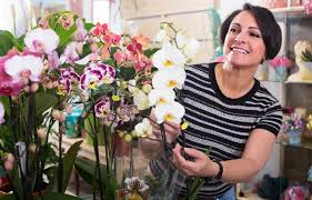 make orchids perfect gifts