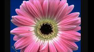 زهور جميلة جدا جدا Youtube