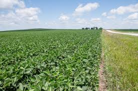 Two learning opportunity events planned | Iowa Soybean Association