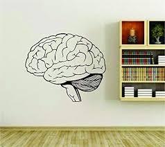 Amazon Com Brain Medical Science Anatomy Vinyl Wall Decal Sticker Car Window Truck Decals Stickers Brainc001 24x28 Home Kitchen