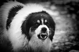Tips On How To Hush A Neighbor S Barking Dog