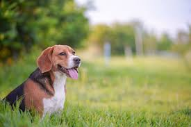 Richmond Hill Animal Hospital Types Pros And Cons Of Electric Fencing For Dogs Richmond Hill Animal Hospital