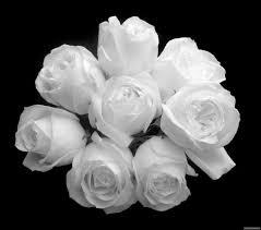 صور ورود بيضاء اجمل لمسات الورود البيضاء دموع جذابة