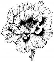 Stock Vector Kleurrijke Bloemen Eenvoudige Doodles En Bloemen