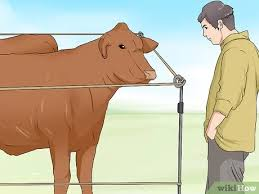 How To Install And Use A Temporary Electric Fence For Cattle