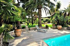 palm trees for transforming your yard