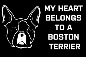 Boston Terrier Boston Terrier Gifts Boston Terrier Decal Etsy