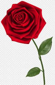 red rose free png